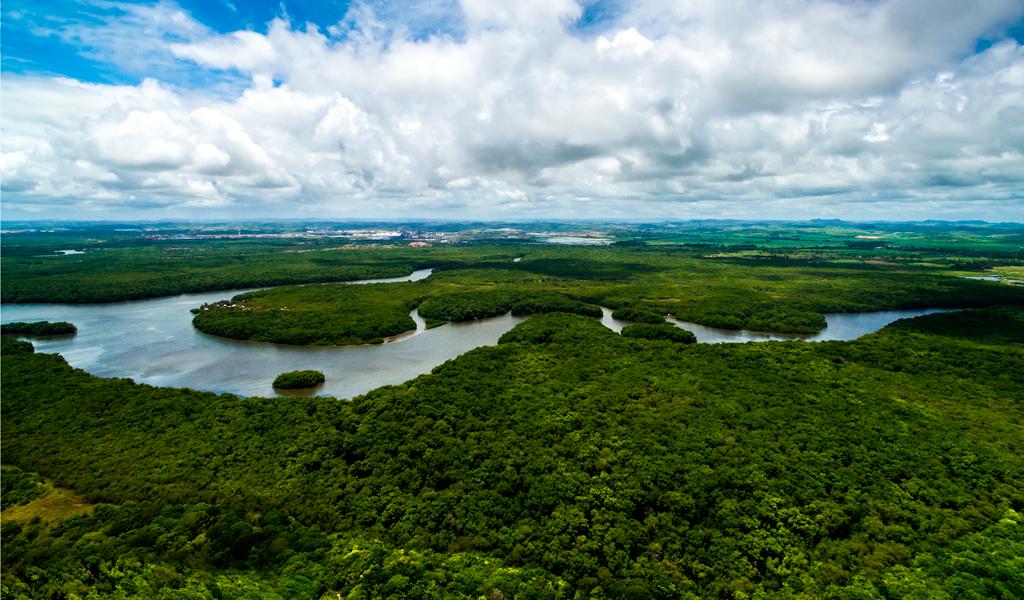 Proyecto en contra de la deforestación en la Amazonía