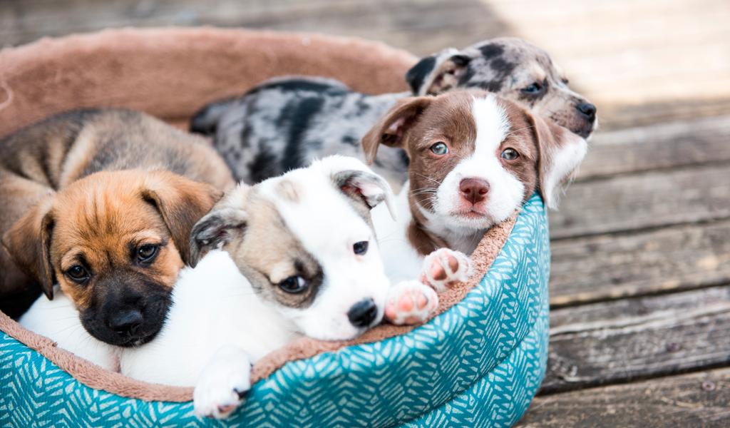 ¿Es malo dormir con mascotas?