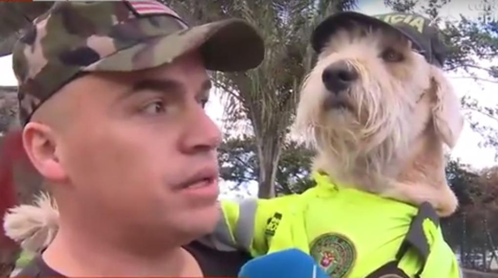 Coronel, el perrito que recorre Bogotá en un taxi