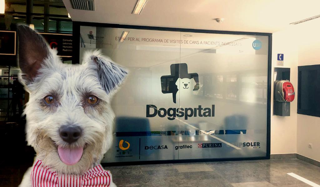 El primer hospital en España que permite el ingreso de perros