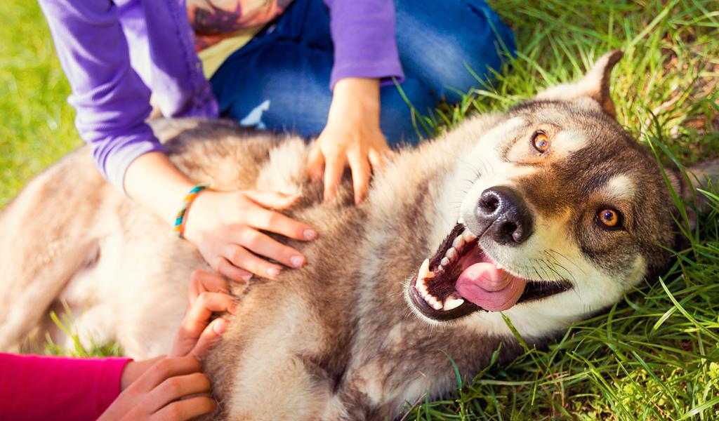 ¿Cómo prevenir la obesidad en perros y gatos?