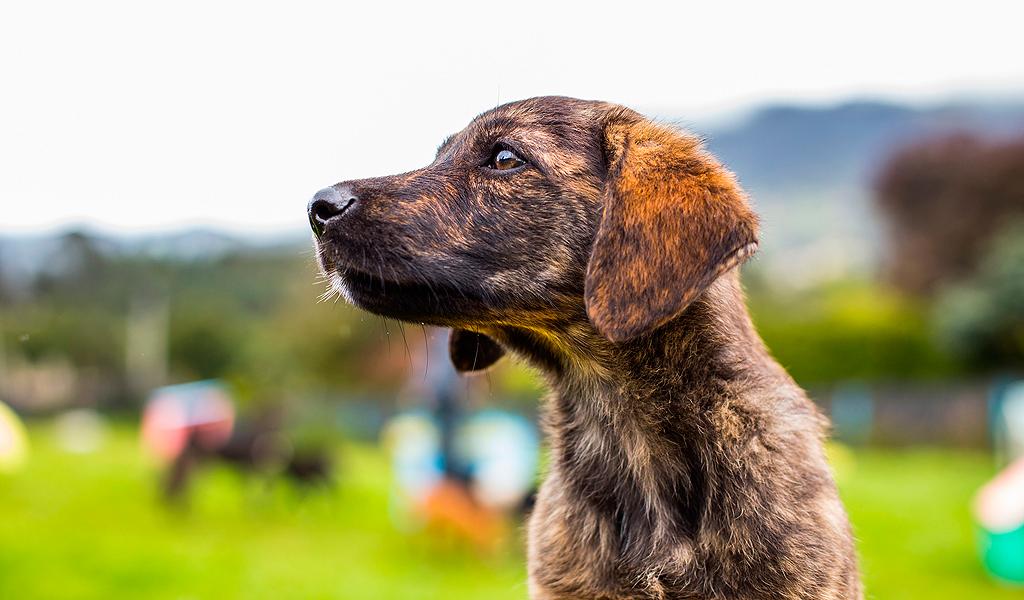 #Ayudandog, iniciativa para donar comida a perros callejeros