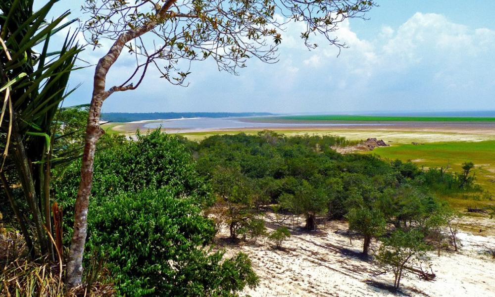 Sistema monitoreará especies arbóreas de la Amazonia