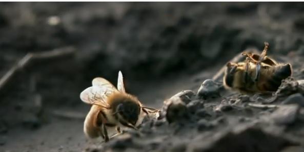 Altura afecta diversidad de abejas de las orquídeas