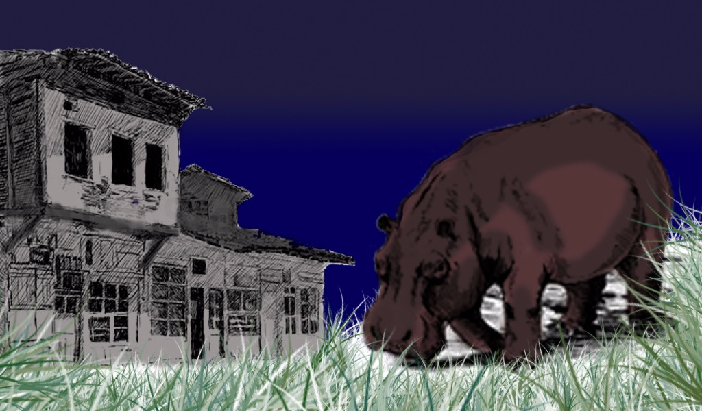 Los hipopótamos que caminan por las calles de Doradal