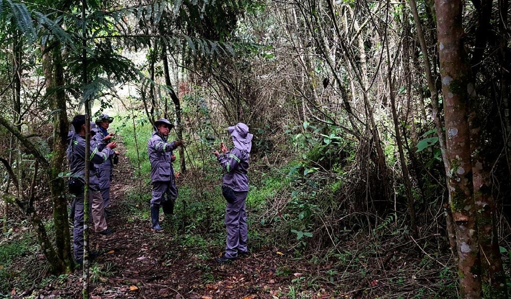 Guardabosques protegerán las cuencas de Medellín