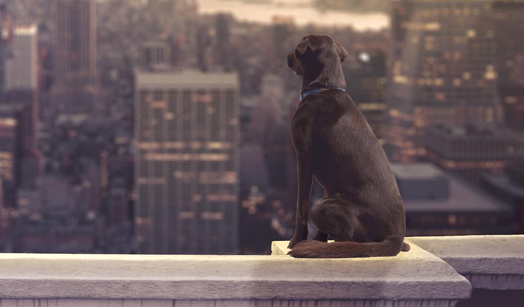 El misterio de los perros suicidas