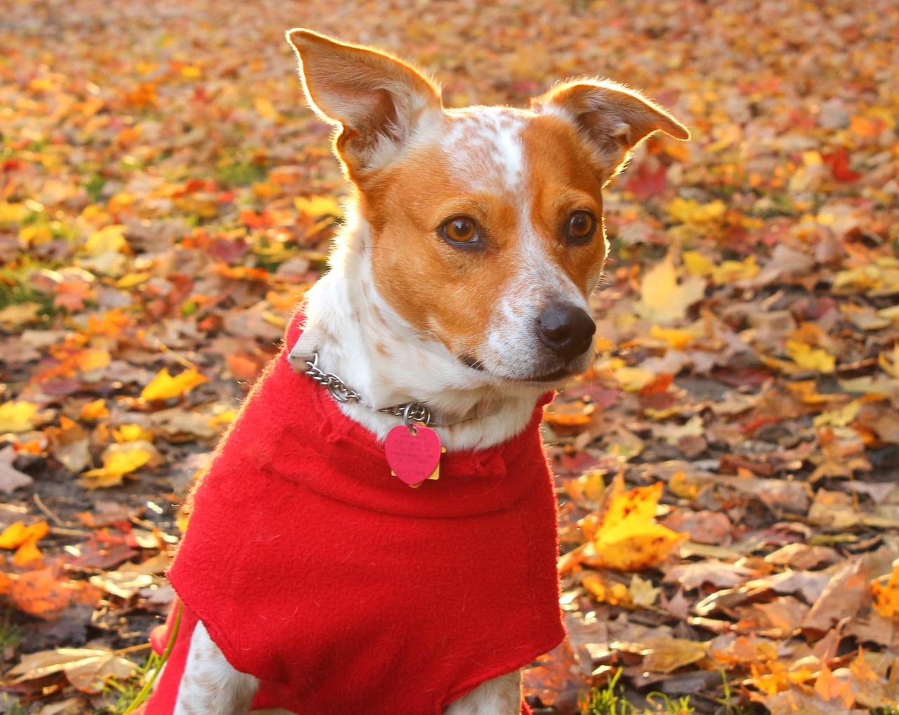 Todo lo que necesita saber sobre la ropa para mascotas