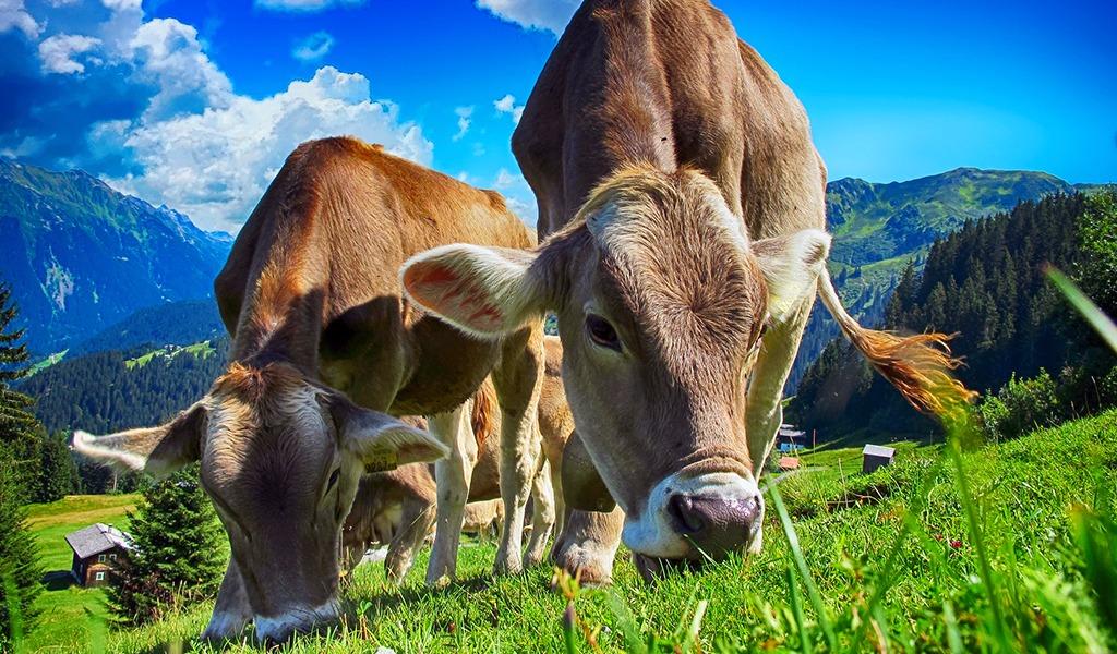 Antioquia y su apuesta a la ganadería sostenible