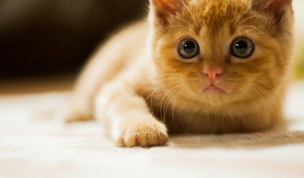 Las mejores aplicaciones para gatos