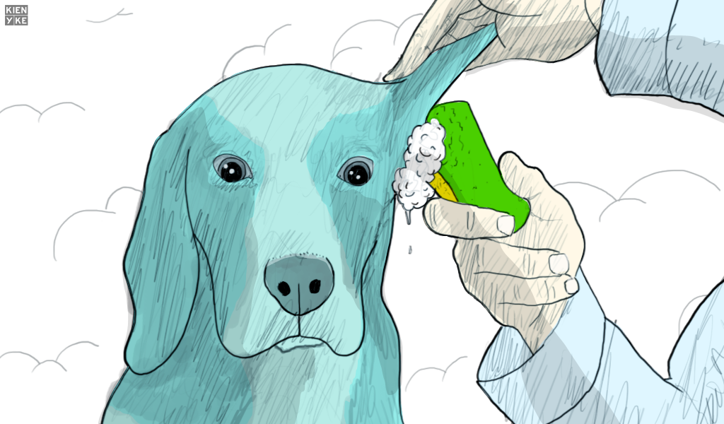perro oídos mascotas