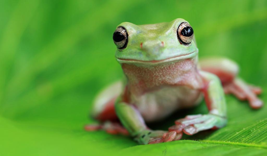 ¿Qué tan pertinente es tener una rana como mascota?