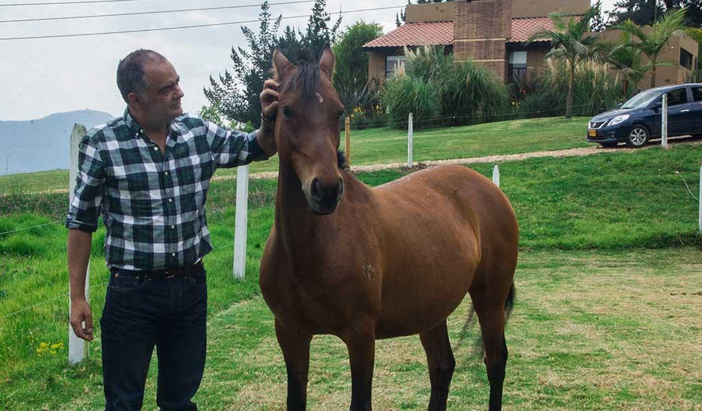 El poder sanador de los caballos