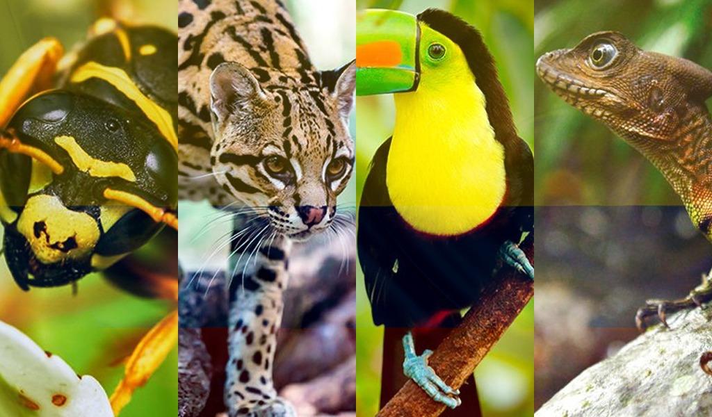 $1.5 billones para conservar la biodiversidad