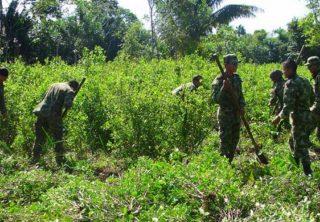 Campesinos retienen a policías que erradicaban cultivos de coca