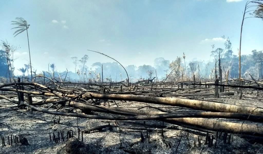 Incendios han consumido 10.000 hectáreas de bosques