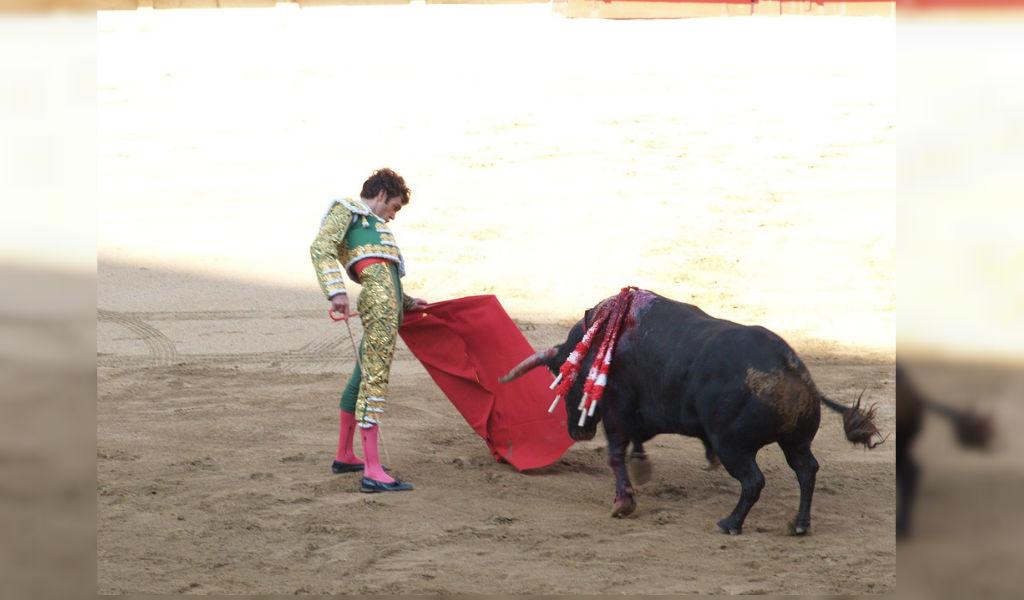 Proyecto para eliminar corridas de toros pasa al Senado