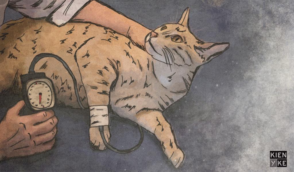 ¡Cuidado! Los gatos también sufren hipertensión