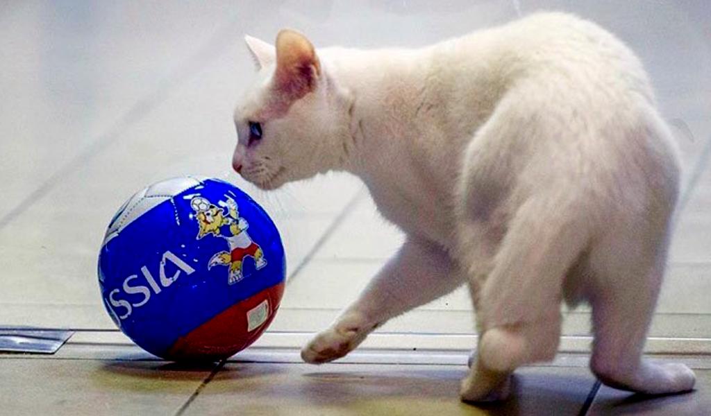 El gato que predice al ganador de Rusia 2018