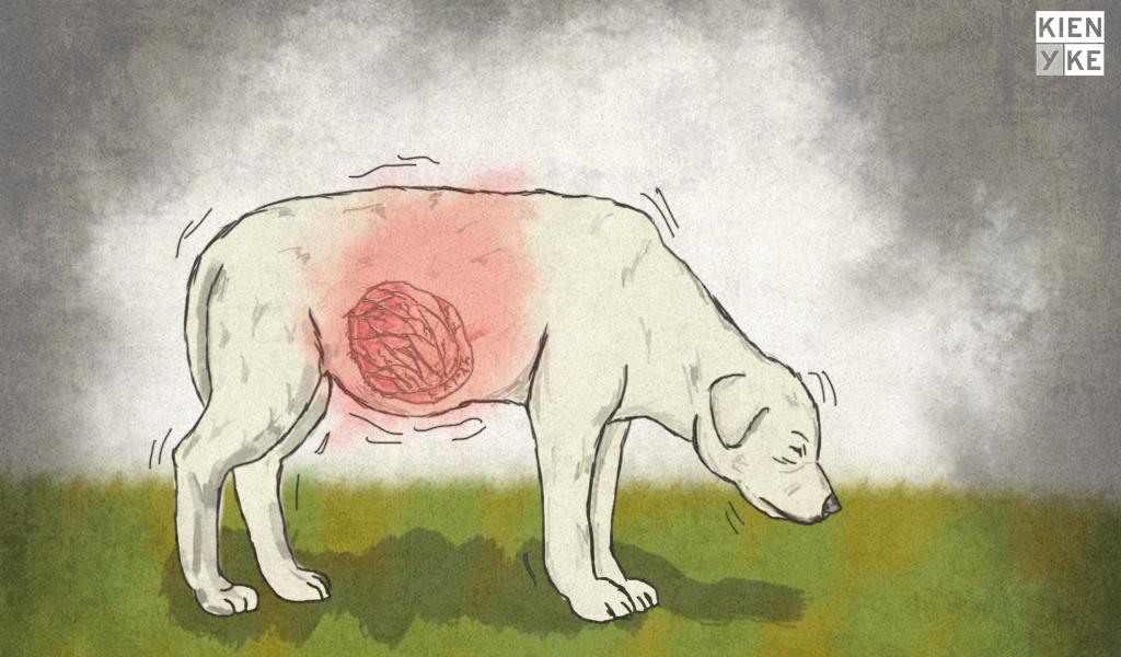 ¿Por qué se da la torsión de estómago en perros?