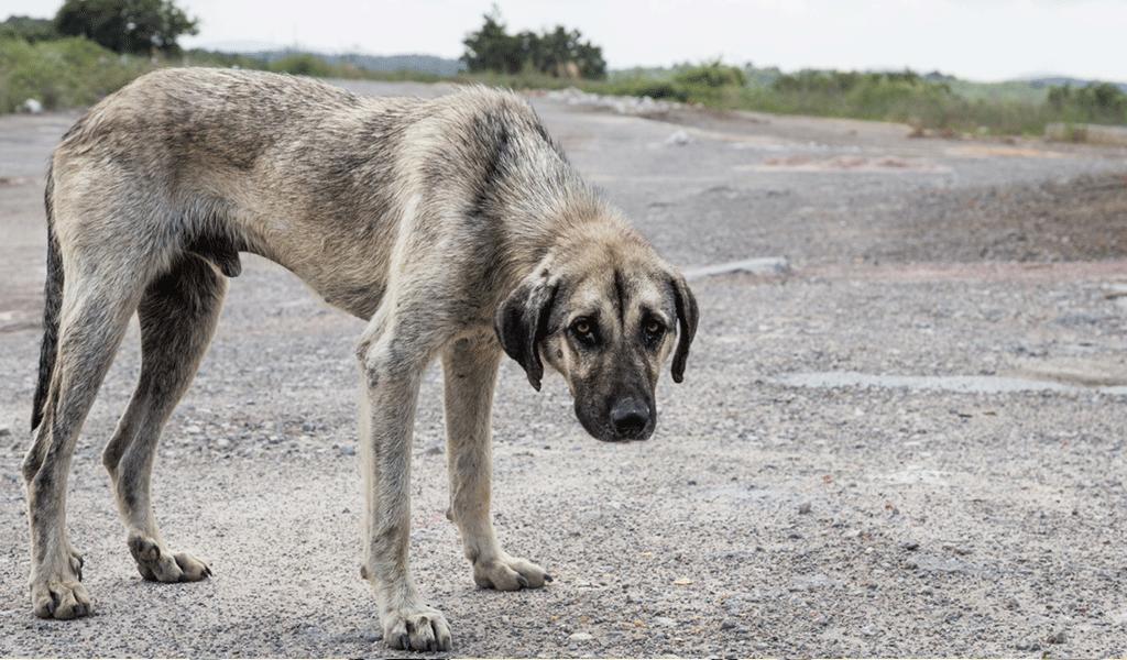 Un perro fue lanzado desde un tercer piso en Ubaté