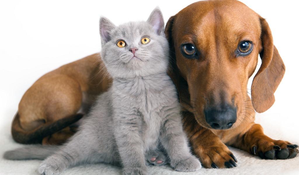 'Adoptatón de amor': jornada para encontrar mascotas