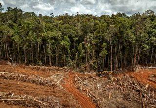 Deforestación en la Amazonía brasileña crece un 30%