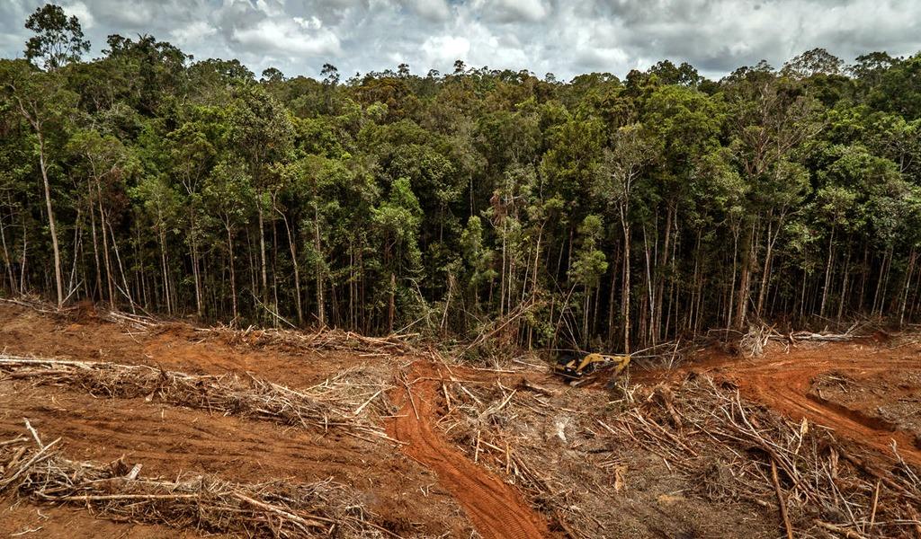 Disminuye la deforestación en Colombia