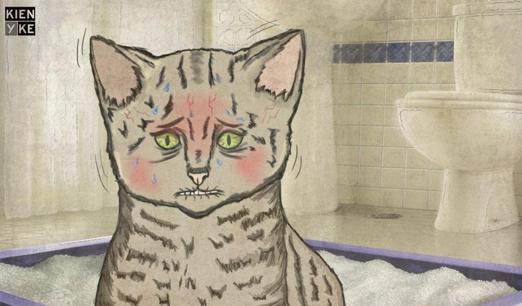 ¿Su gato tiene estreñimiento? Esto puede estar mal