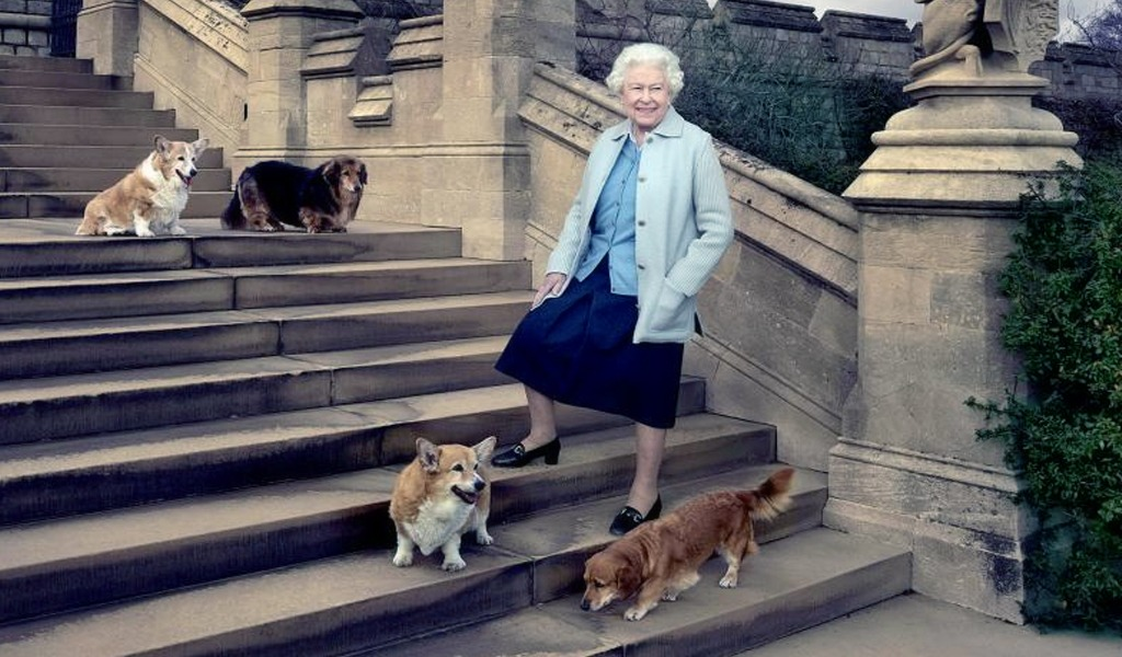 Corgi galés, la raza de perros de la realeza británica