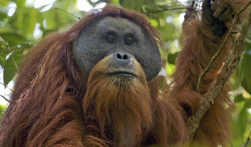 Estas son las 10 especies descubiertas en 2017