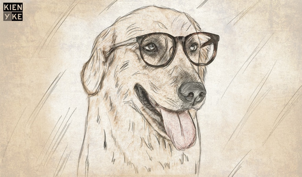 Consejos para proteger los ojos de las mascotas