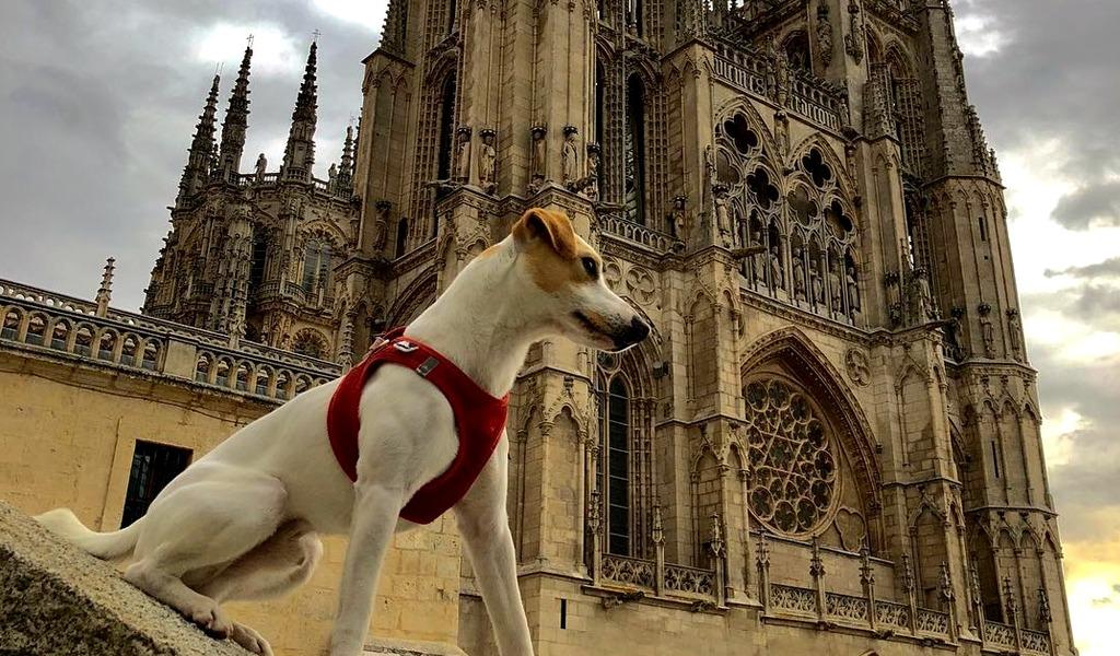 Pipper, el perro que le recomienda a dónde viajar