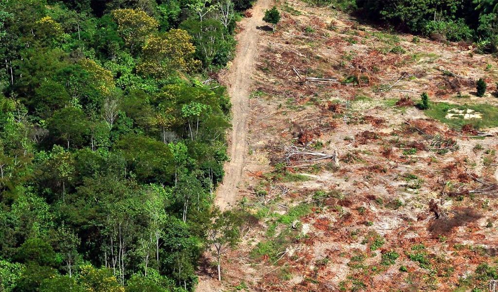 Deforestación en Colombia aumentó 23% durante 2017