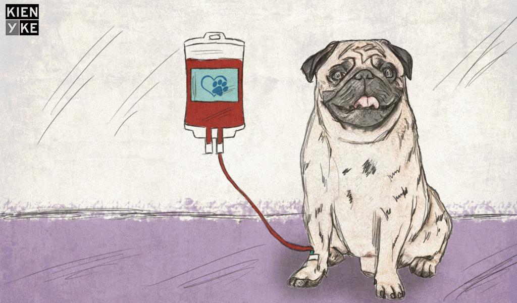 ¿Pueden las mascotas donar sangre?