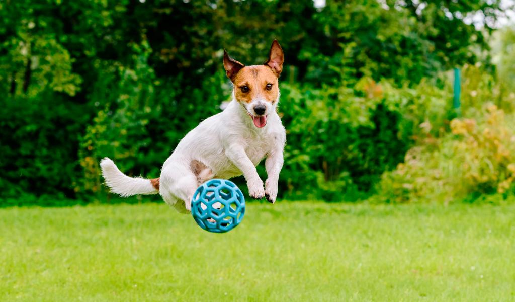 Enfermedades comunes en perros durante el verano
