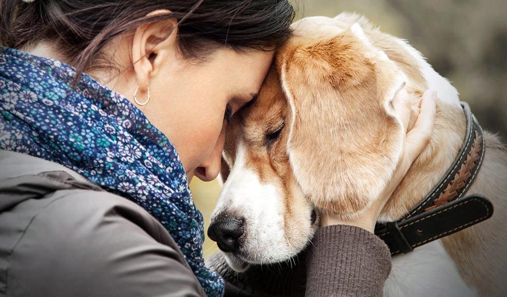 El poder terapéutico de las mascotas y otros animales
