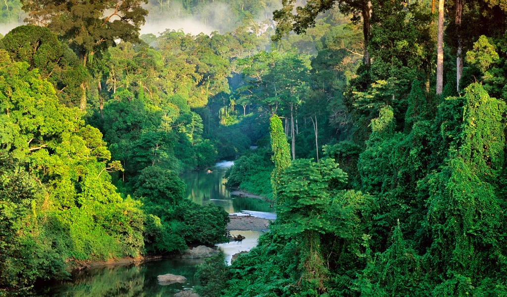 Colombia recibirá recursos para la protección ambiental