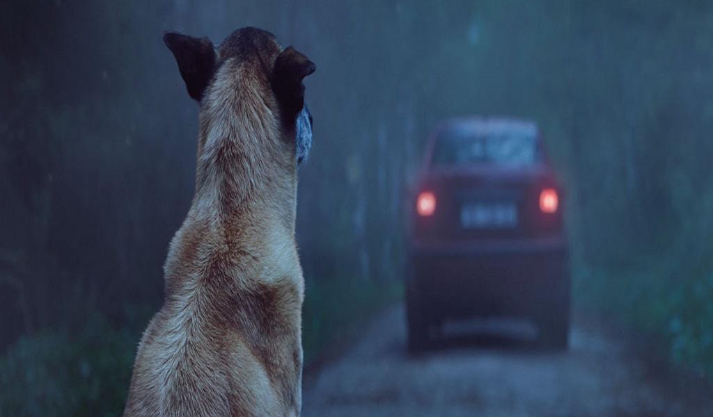 El día que se celebra en honor a los perros callejeros