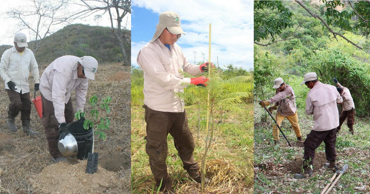 Colombia tendrá 11.079 hectáreas de bosque seco tropical