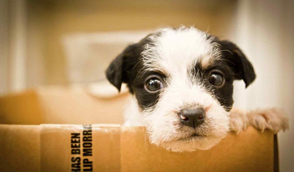 Distrito creó aplicación para adoptar mascotas en Bogotá