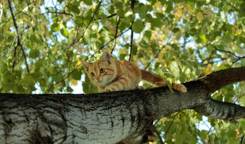 ¿Pueden los gatos sentir miedo a las alturas?