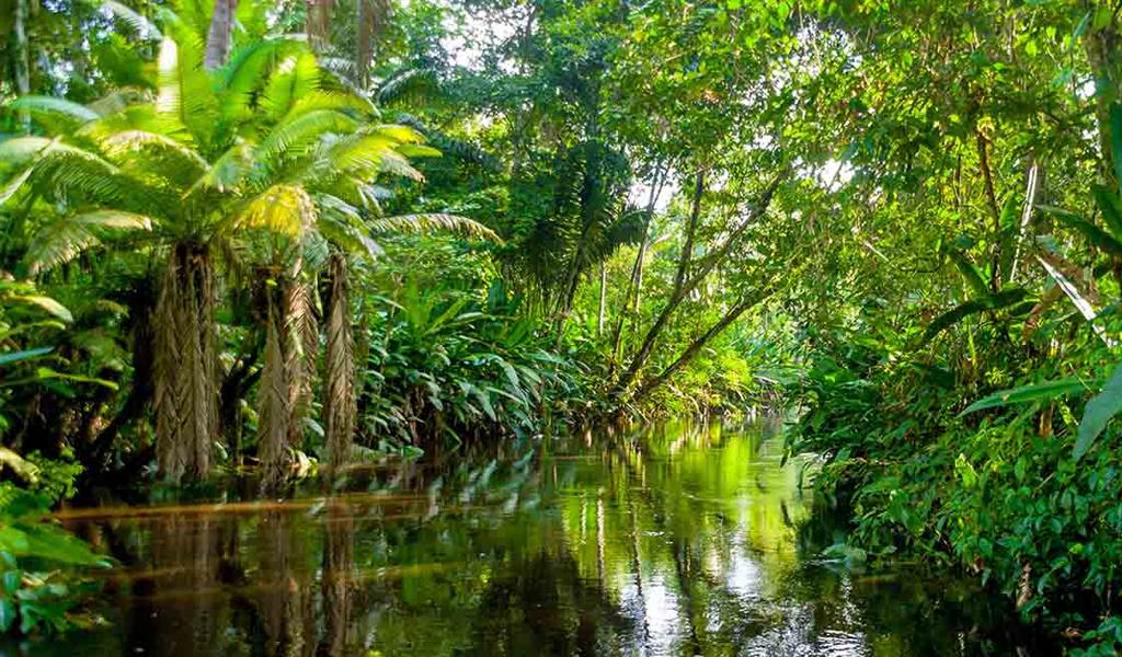 La Amazonia con más calentamiento y sequías prolongadas