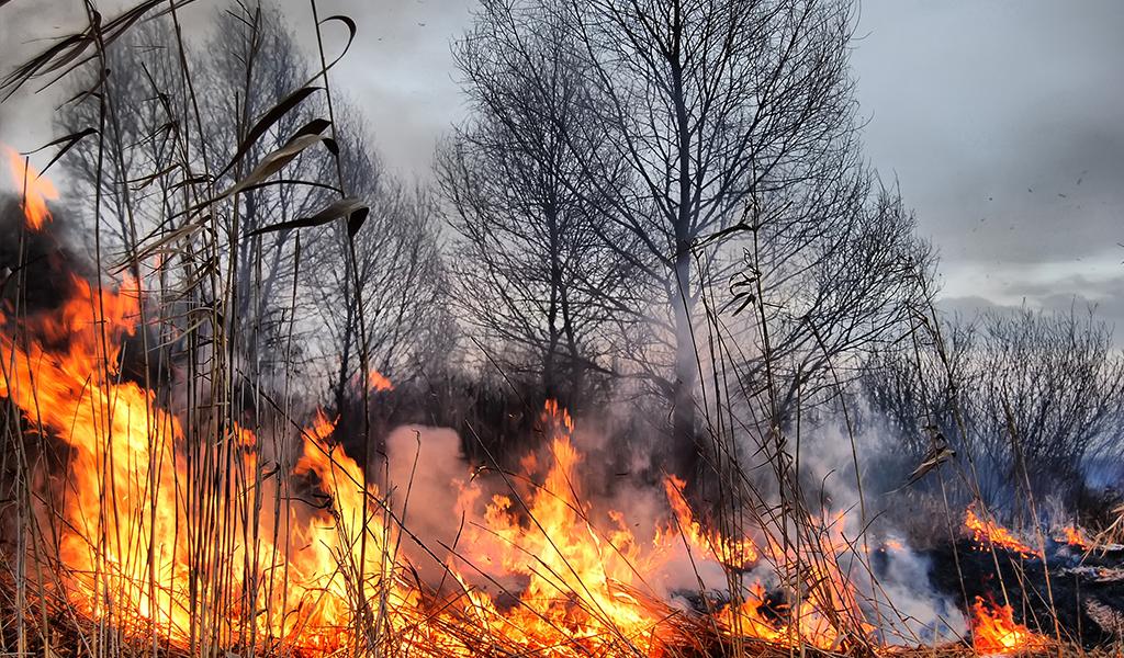 Incendio en Nocaima fue controlado esta mañana
