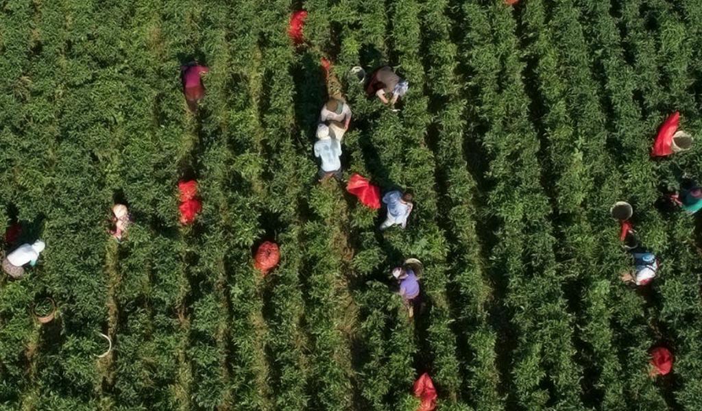 La salud de los suelos es fundamental para la erradicación del hambre