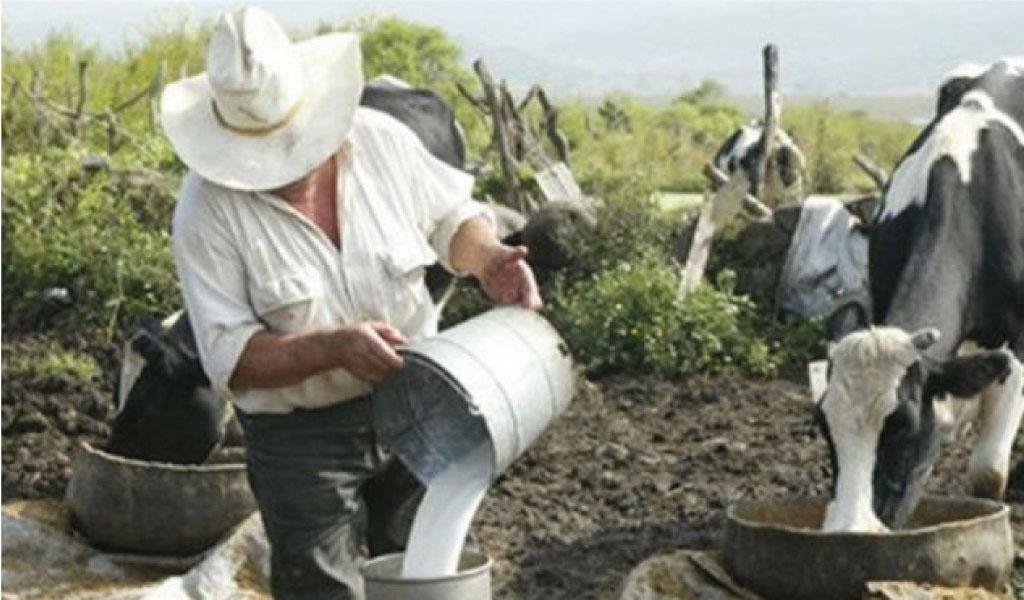 Productores de leche de Ubaté reciben beneficios