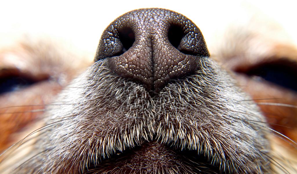 Perros y gatos podrían perder el olfato por contaminación
