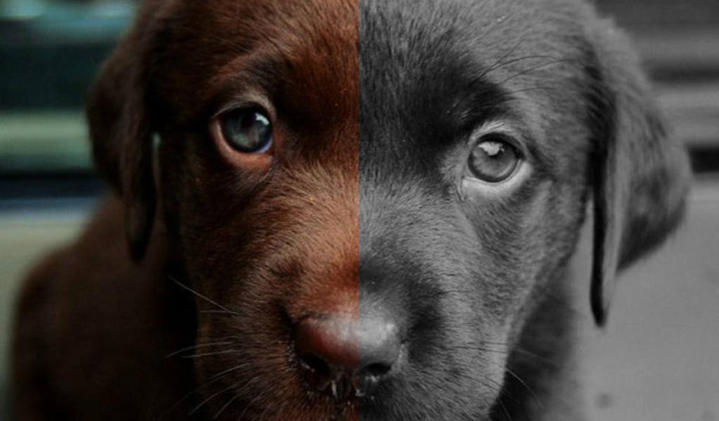 ¿Cómo ven los perros?
