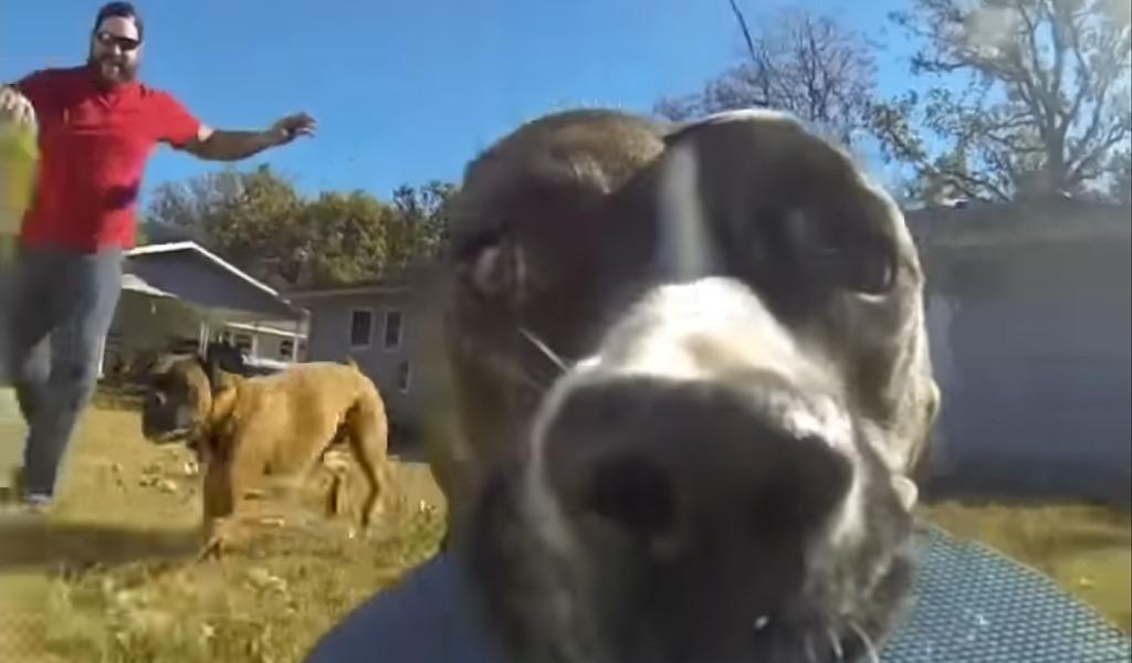 El perro que se volvió viral por robar una cámara