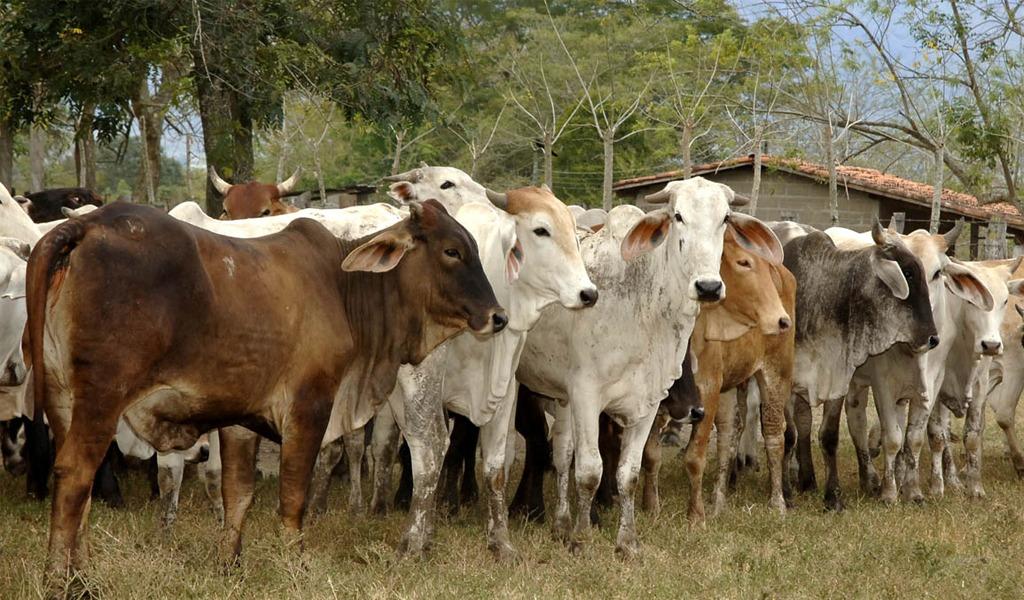 Producir carne contaminaría más que sacar petróleo